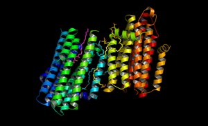 """This graphic shows the structure of diacylglycerol kinase (DgkA) determined with the Free Electron Laser in Stanford, California. This new structure has been deposited in the protein data bank under the code 4UYO."