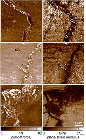 NIST researchers used atomic force microscopy (AFM) to measure the stickiness (pull-off force) and stiffness (plane strain modulus) of hair that was untreated (top), bleached (middle), and conditioned (bottom). The clear differences in the measured results for various hair treatments suggest that AFM might be used to analyze forensic evidence. The measured forces are very small, in units of nanonewtons or nN (1 nanonewton is about the weight of a pollen grain). Modulus is in units of gigapascals or GPa and ranges from 1-5 for the hair samples (for comparison, the plastic lens material polycarbonate measures about 3). @ Delrio/NIST