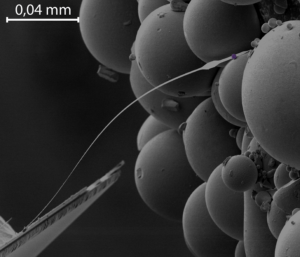 NMR microscope, consisting of a thin wire and a small magnetic ball (fake colour purple). The purple ball induces a uniform magnetic field, so that the surrounding atomic nuclei all line up with their axis pointing in the same direction. The researchers send radio waves through their sample, causing some nuclei to flip the other way, and measure how long it takes before they flip back again.