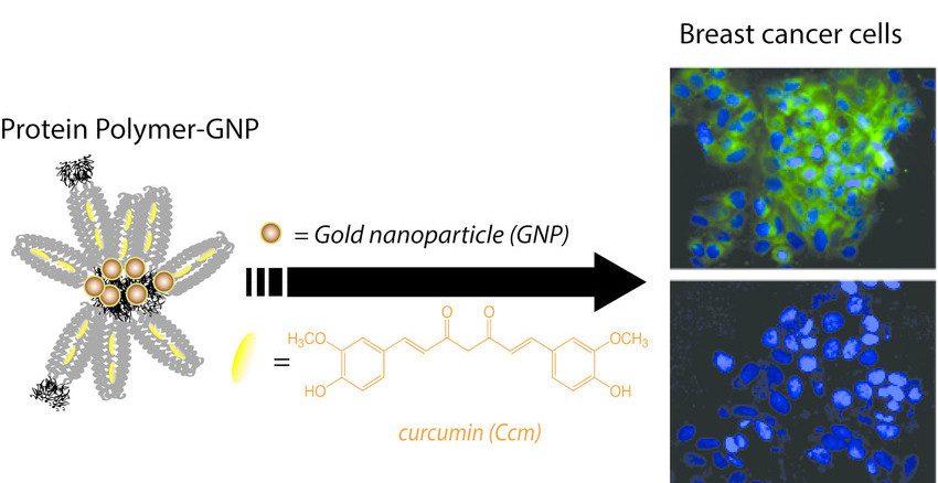 Gold nano particle molecule delivers curcumin to cancer cells