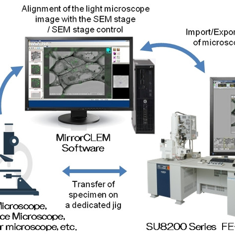 Hitachi High-Tech and RIKEN Launch MirrorCLEM System for Correlative Light and Electron Microscopy