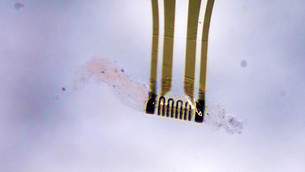Adaptive Microelectronics Reshape Independently and Detect Environment for First Time