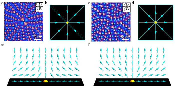 Polarizing optical microscopy images of topological defects depending on the strength of the director field. (a,b,e) Convergent director field arrangements of LC molecules and corresponding schematic images; (c,d,f) Divergent director field arrangements of LC molecules and corresponding schematic images. @ KAIST