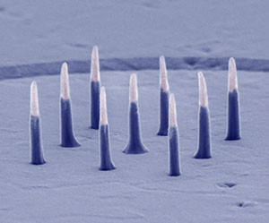 Image: Harvard University/Nature Nanotechnology