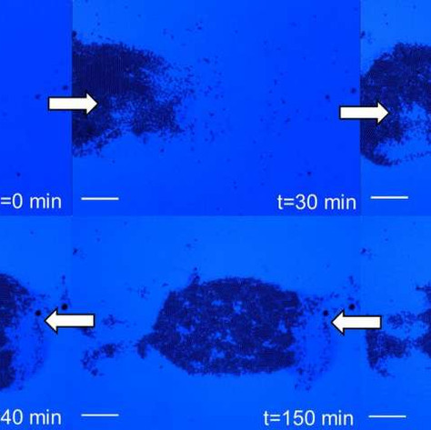 New method uses ultraviolet light to control fluid flow and organize particles