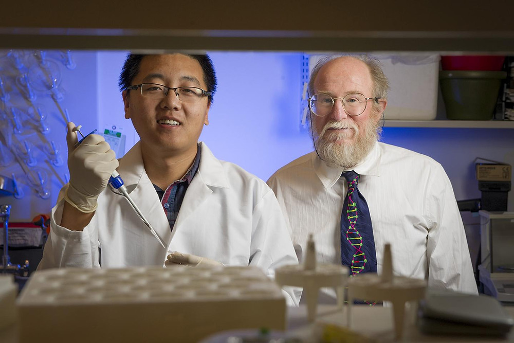 Duke graduate student Tianqi Song and computer science professor John Reif have created strands of synthetic DNA that, when mixed together in a test tube in the right concentrations, form an analog circuit that can add, subtract and multiply as the molecules form and break bonds. While most DNA circuits are digital, their device performs calculations in an analog fashion, without requiring special circuitry to convert signals to zeroes and ones first. @ Photo by John Joyner