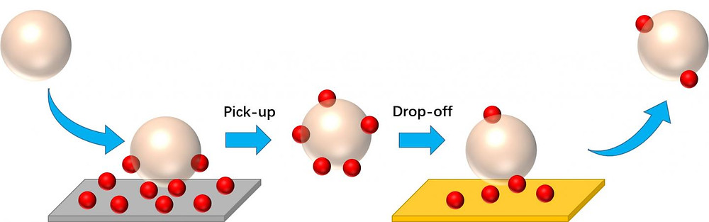 Oil-in-water droplets represented by shiny spheres stabilized by functional surfactants first pick up the nanoparticles, represented by small red balls, when traversing a nanoparticle-coated surface. Later in the same in-line process, when the particle-attached droplets meet the downstream empty surface with a high affinity for the nanoparticles, they drop the nanoparticles off onto the surface and move forward in the aqueous flow. @ UMass Amherst/Richard Bai