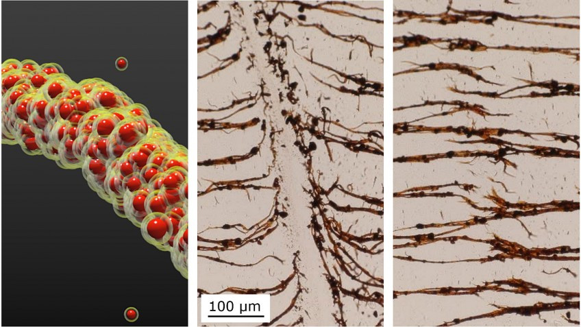 NC State researchers develop a technique to assemble nanoparticles into filaments (left) in liquid. The filaments can be broken (middle) and then re-assembled (right). Image courtesy of Bhuvnesh Bharti.
