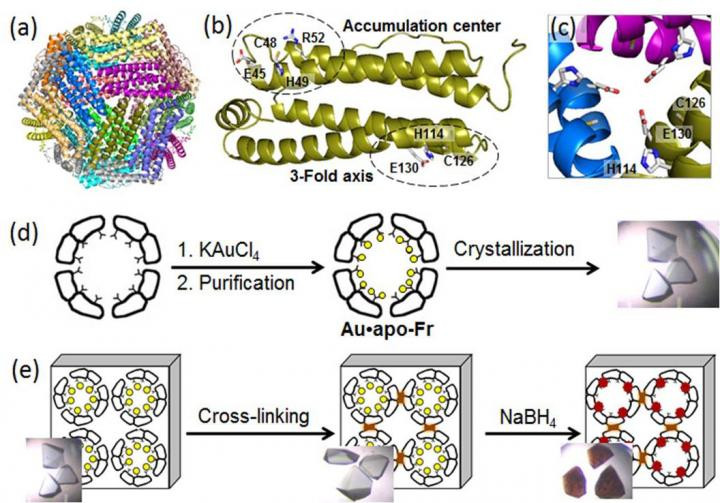 (a) Structure of the 24-mer ferritin molecule; (b) a ferritin monomer with the metal-binding sites; (c) a symmetric 3-fold axis channel; (d) preparation and crystallization of Au-containing ferritin; (e) cross-linking of the ferritin crystal and reduction of Au ions (yellow circles) into Au(0) atoms which form nanoclusters (brown particles). @ Tokyo Institute of Technology