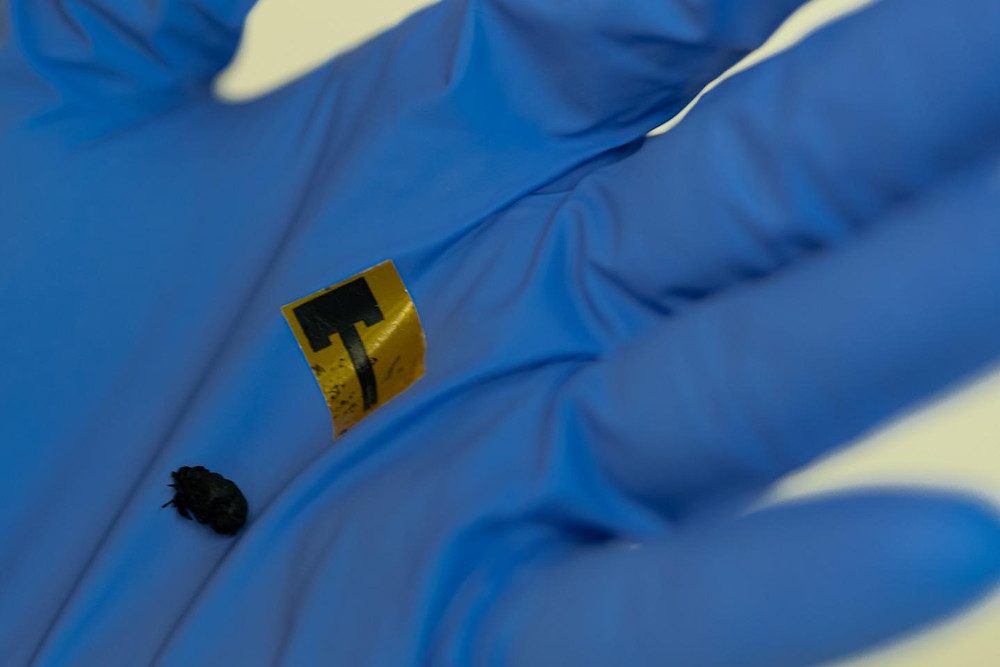 Metal-free antennas made of thin, strong, flexible carbon nanotube films are as efficient as common copper antennas, according to a new study by Rice University researchers.  @ Jeff Fitlow/Rice University