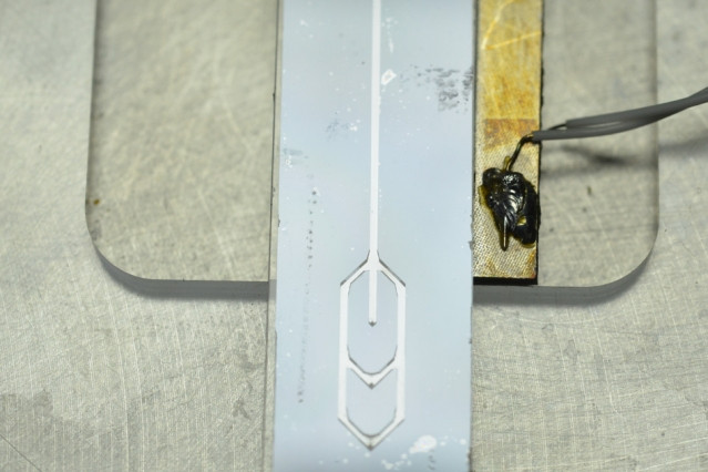 A new cell-sorting device consists of a microfluidic channel that vibrates at a very low frequency. As cells flow through the channel, they are pushed to a certain position depending on how they interact with the acoustic forces generated by the vibration. Pictured is an example of the device.  Photo courtesy of the researchers