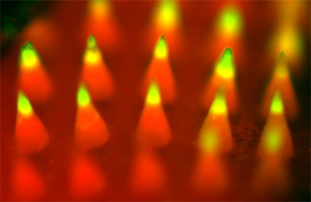 Fluorescence imaging of a microneedle patch. Image credit: Yanqi Ye.