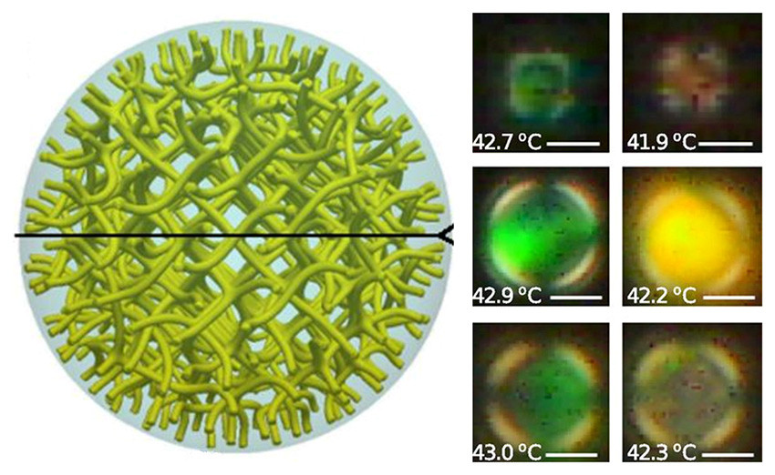 Confined in droplets, exotic phases of liquid crystals have been simulated (left) and experimentally observed (right). These phases result from defects that are organized into highly ordered patterns. The geometrical characteristics of this three-dimensional arrangement can be controlled by manipulating the droplet's size, temperature, and interfacial characteristics. As the organization of the defects changes, it diffracts light differently, leading to pronounced color changes. The panels on the right show experimentally observed droplets, in which color is altered by temperature changes of a fraction of a degree. The image on the left shows the array of defects that is predicted to exist within the droplets.