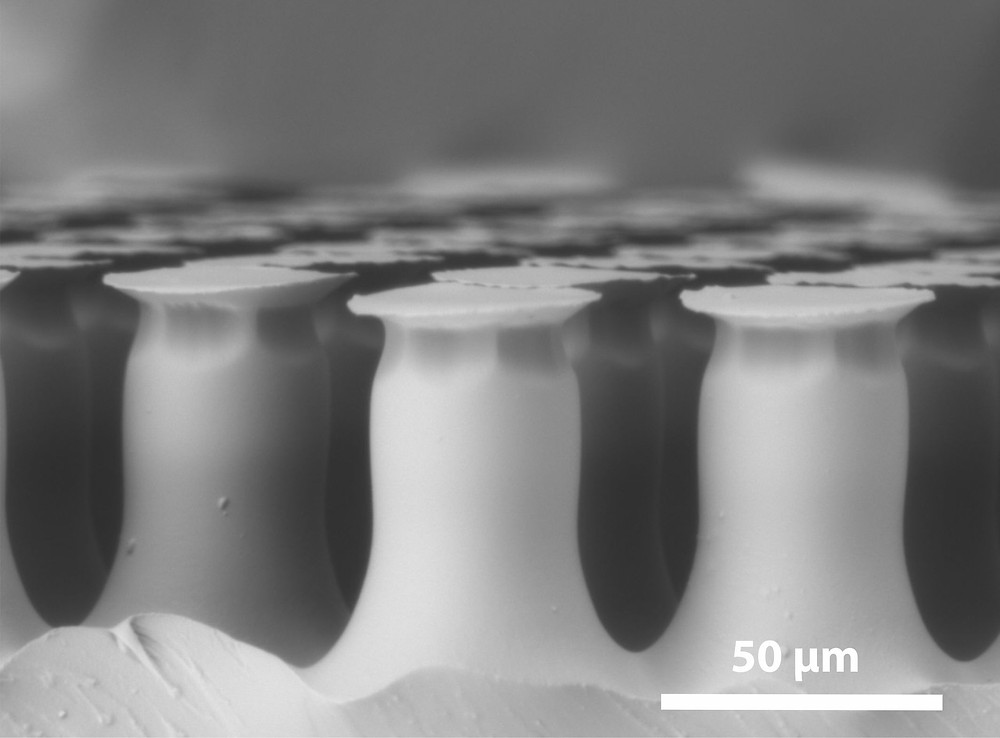 The second, adhesive material is a polymer modelled on examples from nature. Its surface consists of a mushroom-shaped microstructure which becomes visible under the scanning electron microscope. It is recreated with highly adhesive, reversible adhesive elements, as can be found in some species of beetle. Photo/Copyright: Emre Kizilkan