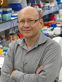 Dmitri Simberg, Ph.D., and University of Colorado Cancer Center colleagues unravel the mechanisms that let the immune system recognize nanoparticles, potentially helping useful particles evade the body's defenses.   Credit  CU Cancer Center