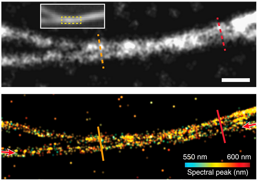 Conventional PLM image of two closely spaced microtubules of the square region in the wide-field fluorescence image, as shown in the inset. Scale bar, 200 nm. SPLM image with spectral regression. @ Northwestern University