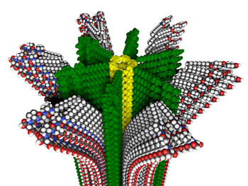 Northwestern University researchers have developed a new hybrid polymer with removable supramolecular compartments, shown in this molecular model. [Credit: Mark E. Seniw, Northwestern University]