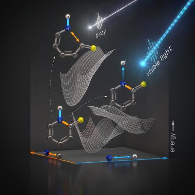The experimental data shows how a light pulse dissociates a hydrogen nucleus from the nitrogen atom without destroying important bonds within the molecule. @ Th. Splettstösser/HZB