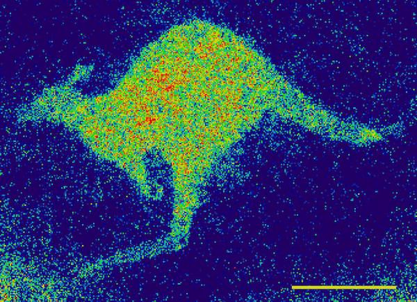 Electron spin image of copper (II) ions in a patterned region of the diamond defined by the kangaroo. The scale bar in the image is 10 micrometers. @ David Simpson