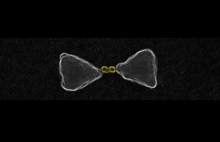 These are gold nanoparticles chemically guided inside the hot-spot of a larger gold bow-tie nanoantenna. @ E Cortes et al, 2017