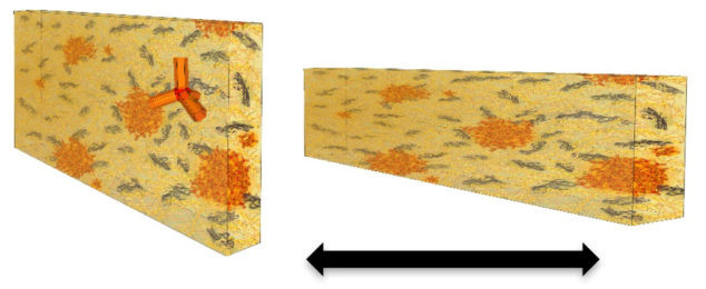 This schematic shows a tetrapod-polymer film before and after it is stretched length-wise. The orange areas are clusters of tetrapods. The scientists found the color of light emitted by the tetrapods changed when the polymer was stretched. (Credit: Berkeley Lab)