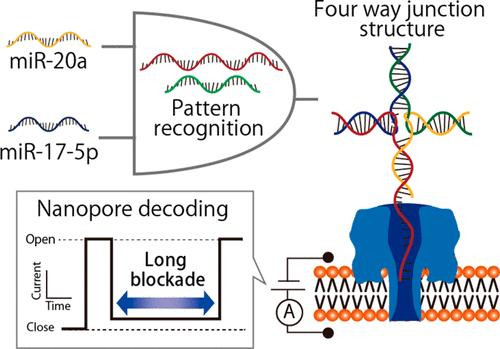 DNAs autonomously recognized two microRNAs, miR-20a and miR-17-5p, and formed a four-way junction structure that was captured in the nanopore, showing long blocking currents.  @ Figure adapted with permission from Anal. Chem., 2018, 90 (14), pp 8531-8537. Copyright © 2018 American Chemical Society