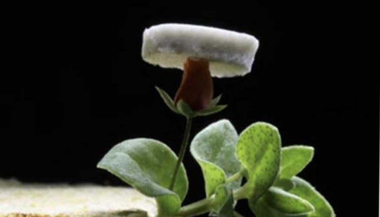 A new ultralight silver nanowire aerogel developed by Lawrence Livermore National Laboratory scientist is so light that it could lay on a fragile rosebud without the flower wilting.