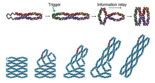 DNA arrays change shape in response to an external trigger. @ Yonggang Ke