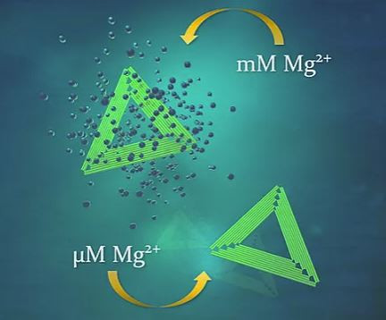 DNA origami nanostructures (green triangles) survive although magnesium concentration is drastically decreased from fabrication conditions. @ Boxuan Shen and Veikko Linko