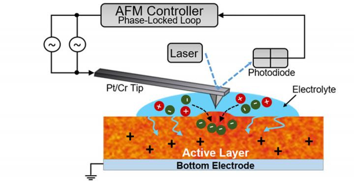 This is a schematic of the electrochemical strain microscopy technique used to measure which regions of the P3HT film could subtly swell to let in ion molecules. @ Rajiv Giridharagopal