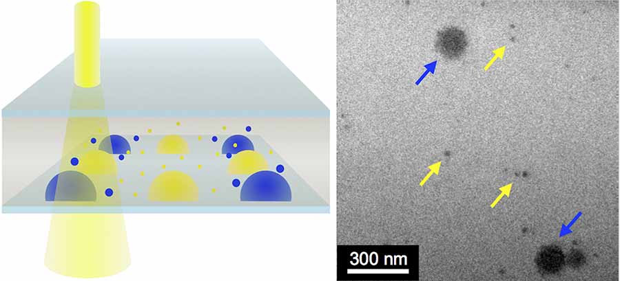 By mixing combinations of gold nanoparticles (yellow arrows) with other nanoscale crystals (blue arrows) in the LCTEM (at left), the chemists showed their technique works. Images by Lucas Parent, UC San Diego