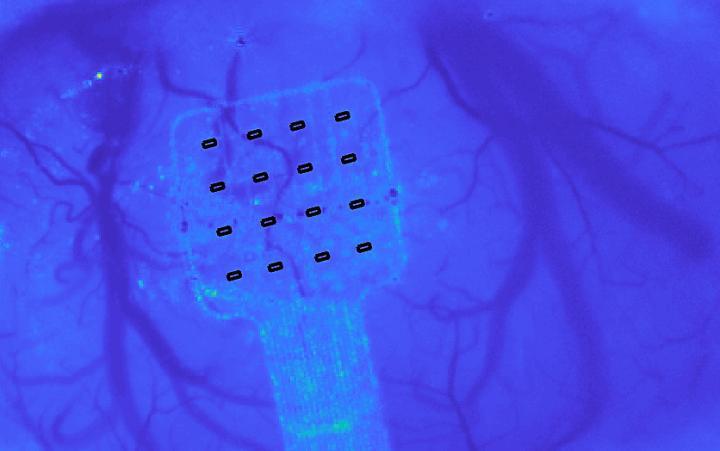 Graphene-based sensors could will enhance our understanding of the brain  @ ICFO/Ernesto Vidal