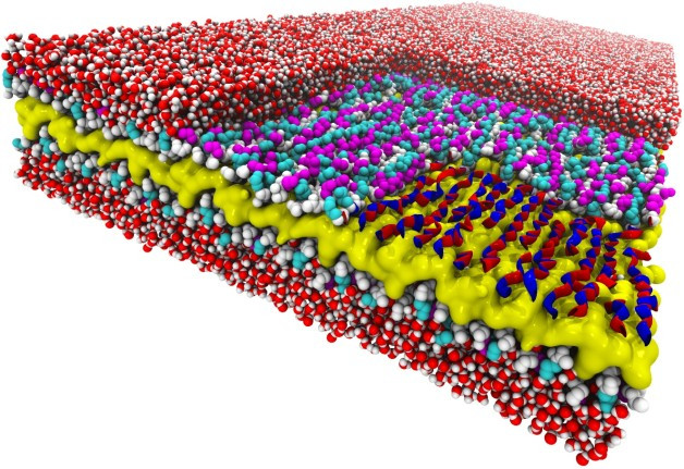 "Snakes on a plane: This atomic-resolution simulation of a two-dimensional peptoid nanosheet reveals a snake-like structure never seen before. The nanosheet's layers include a water-repelling core (yellow), peptoid backbones (white), and charged sidechains (magenta and cyan). The right corner of the top layer of the nanosheet has been ""removed"" to show how the backbone's alternating rotational states give the backbones a snake-like appearance (red and blue ribbons). Surrounding water molecules are red and white. (Credit: Ranjan Mannige, Berkeley Lab)"