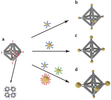 Scientists built octahedrons using ropelike structures made of bundles  of DNA double-helix molecules to form the frames (a). Single strands of  DNA attached at the vertices (numbered in red) can be used to attach  nanoparticles coated with complementary strands. This approach can  yield a variety of structures, including ones with the same type of particle  at each vertex (b), arrangements with particles placed only on certain  vertices (c), and structures with different particles placed strategically  on different vertices (d).