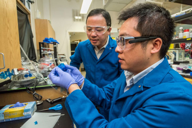 Postdoctoral researcher Cheng Gong (right) and senior faculty scientist Xiang Zhang (standing) obtain 2-D flakes of chromium germanium telluride (CGT) using adhesive tape. They discovered intrinsic ferromagnetism in 2-D van der Waals materials (Credit: Marilyn Chung/Berkeley Lab)