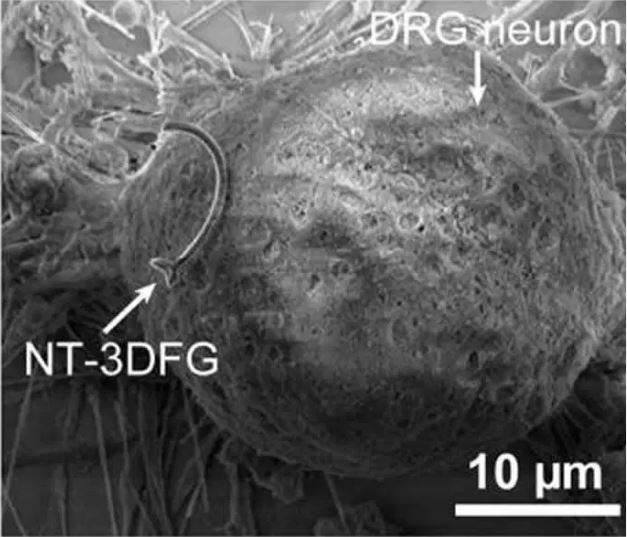 Nanowires are able to stimulate neurons from outside the cell membrane. Image is credited to Carnegie Mellon University College of Engineering.