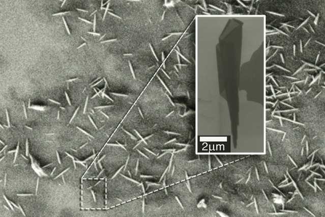An electron microscopy image shows many examples of nanoscrolls. The insert zooms in on a single nanoscroll and reveals its conical nature.  Courtesy of the researchers
