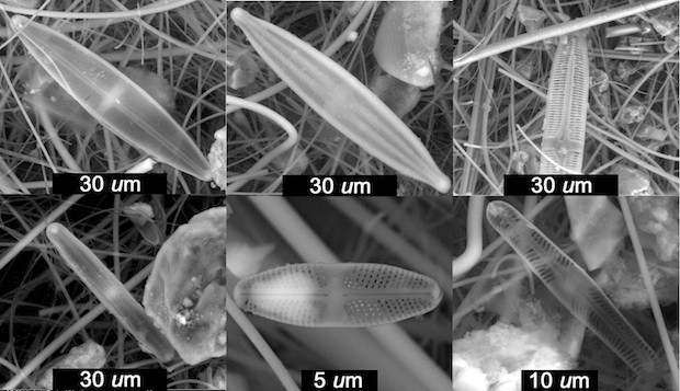 Pennate (elongated) diatoms found in an ice core from the Quelccaya Summit Dome Glacier were among many samples identified by scientists at Rice University, the University of Nebraska-Lincoln and Ohio State University. They suspect the freshwater diatoms, a type of algae, were blown there from nearby high-elevation ponds as far back as the sixth century. Images by Bruce Brinson/Rice University