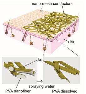 The diagram at top illustrates the structure of gold nanomesh conductors laminated onto the skin surface. The nanomesh, constructed from polyvinyl alcohol (PVA) nanofibers and a gold (Au) layer, adheres to the skin when sprayed with water, dissolving the PVA, as depicted in the enlarged diagrams at bottom. @ 2017 Someya Laboratory.