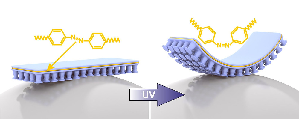 The new composite material consists of two substances: an adhesive material (blue) and an elastic LCE (liquid crystal elastomer) plastic (yellow). LCE is made up of azobenzene molecules which bend - thus bending the whole material - when they are irradiated with UV light. The curvature causes the adhesive elements to detach from the object. Image/Copyright: Emre Kizilkan and Jan Strüben