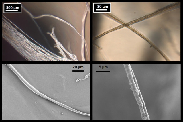 Microscope images of lab-produced fibers confirm the results of the MIT researchers' simulations of spider silk. At top are optical microscope images, and, at bottom, are scanning electron microscope images. At left are fibers 8 micrometers across, and, at right, are thinner, 3 micrometer fibers.  Courtesy of the researchers