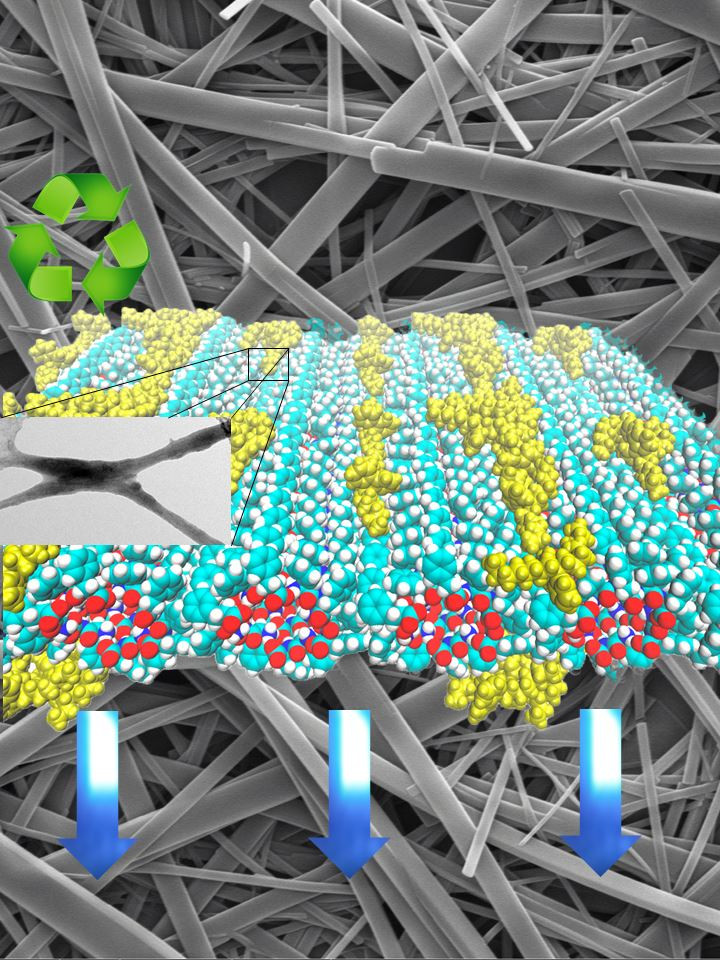 Nanocomposite Depiction The illustration shows a theoretical simulation of the distribution of the polymer on peptide nanotubes and an electron microscopy image of the nanocomposite.