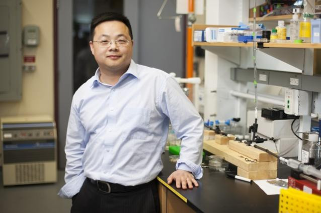 Research by Assistant Professor of Biomedical Engineering Qiaobing Xu and colleagues could lead to new ways to repair nerve tissue injuries.