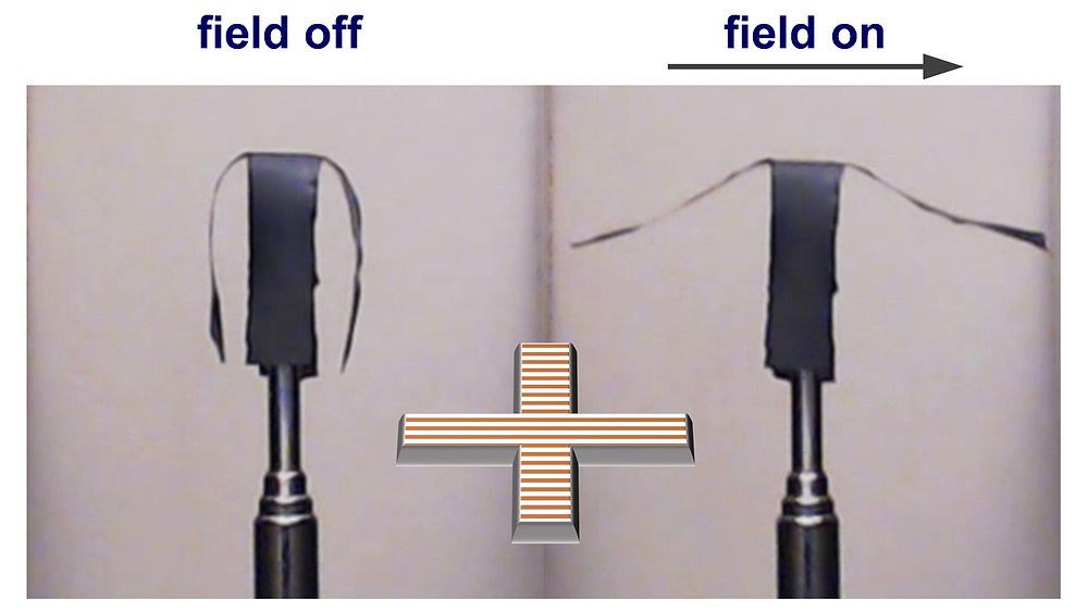This image shows a selective actuation of the side arms of a soft robot in a horizontal uniform magnetic field. Credit: Sumeet Mishra, North Carolina State University