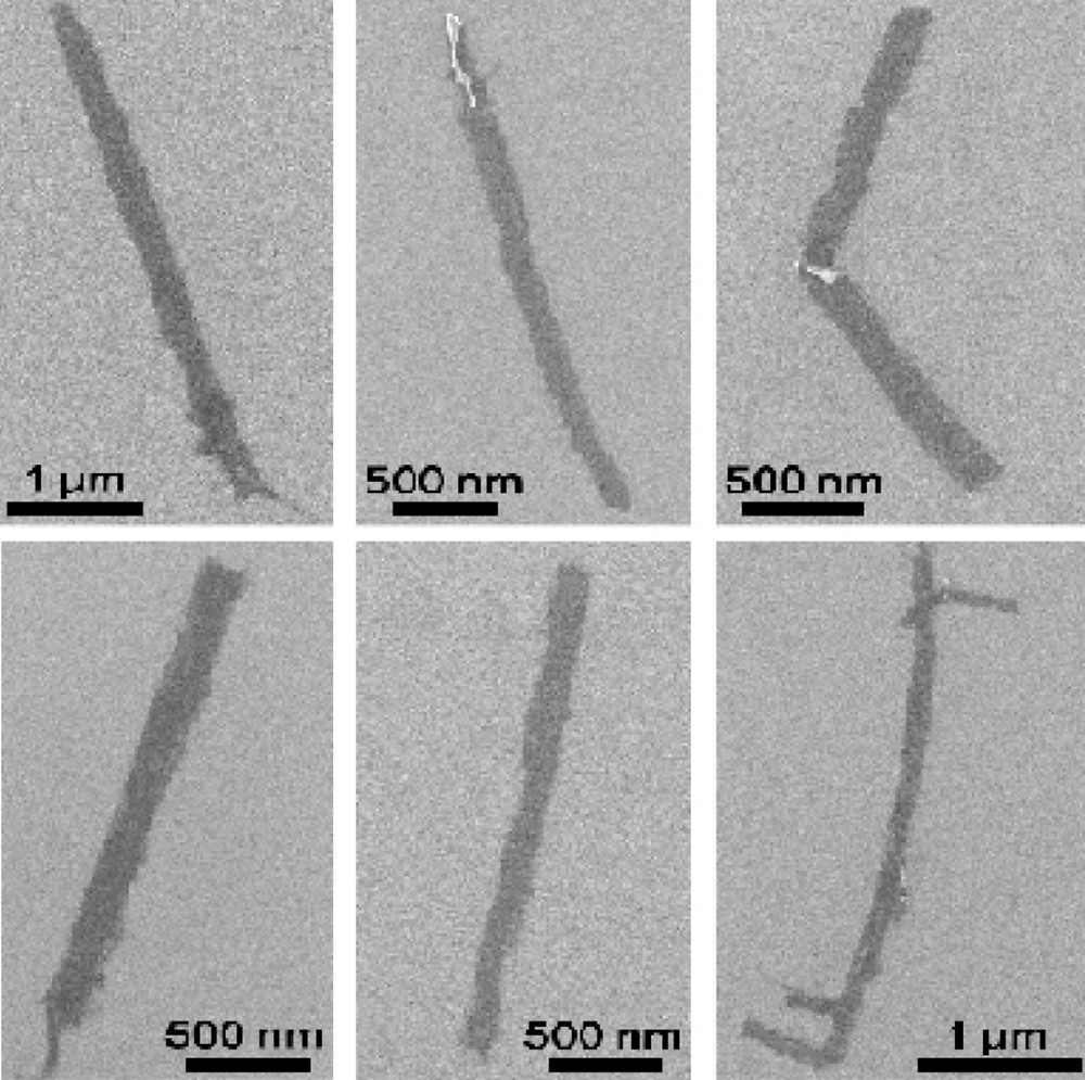 Graphene nanoribbons unzipped from multiwalled carbon nanotubes at Rice University are seen in microscope images. When their edges are modified with polyethylene glycol, the nanoribbons provide conductive surfaces for neuronal growth. (Credit: Tour Group/Rice University)