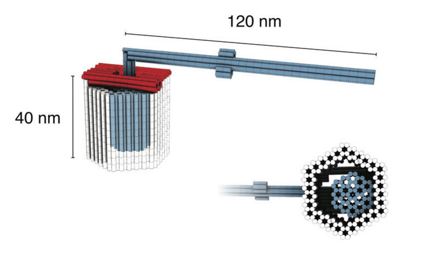 Rotor mechanism assembled from 3-D DNA components. Dietz Lab/TUM