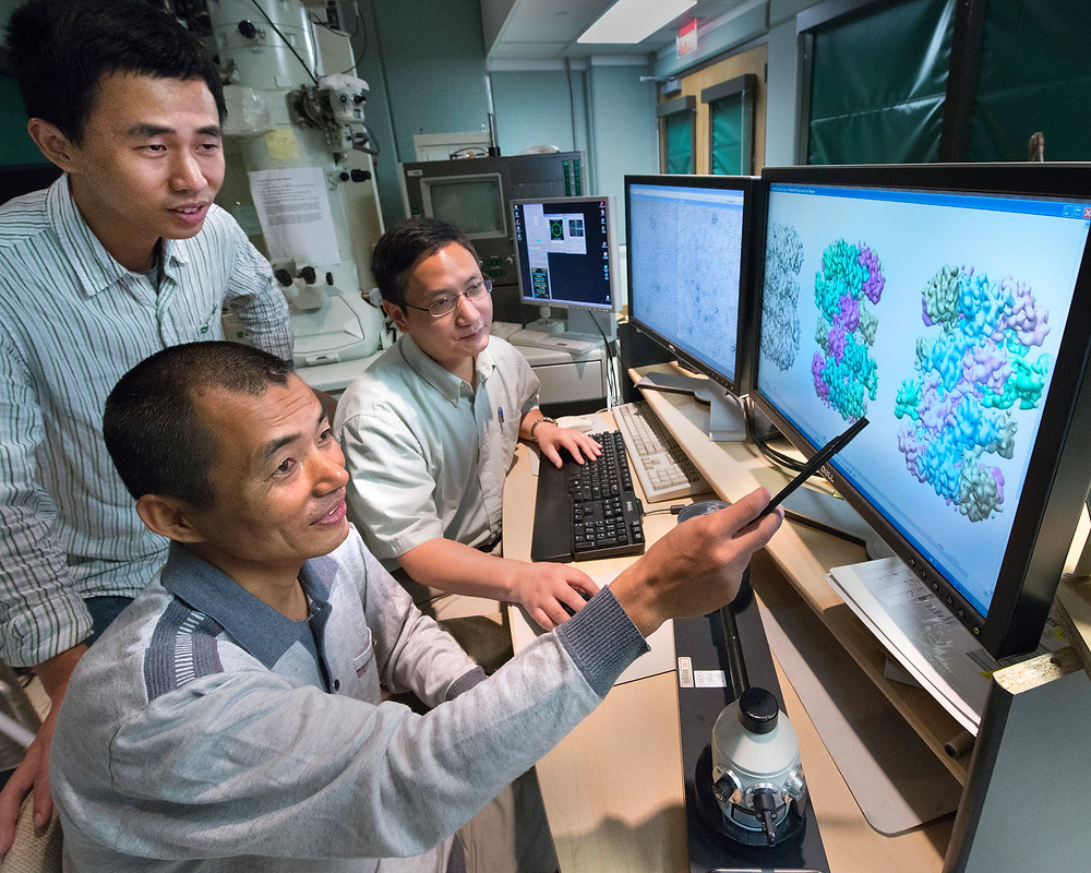 Collaborating scientists and study coauthors Zuanning Yuan, a graduate student at Stony Brook University (standing), Huilin Li of Stony Brook and Brookhaven Lab (seated, back), and Jingchuan Sun of Brookhaven Lab (seated, front) examining protein structures.