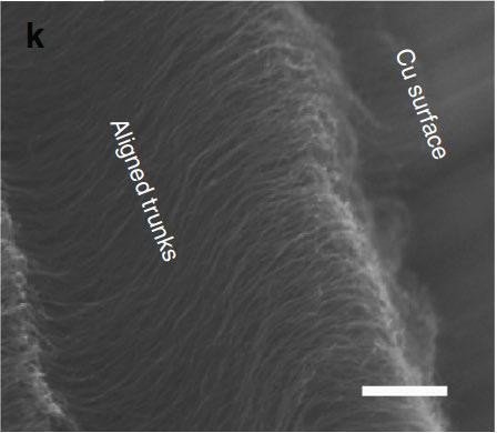 A side view provided by a scanning electron microscope shows that the structural integrity of the carbon nanotube adhesive holds up after exposure to 1033 degrees Celsius. CREDIT Courtesy of Science Communications