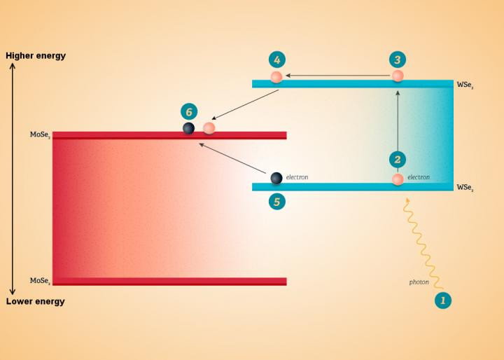 This image shows an energy diagram of the WSe2-MoSe2 device. When a photon (1) strikes the WSe2 layer, it knocks loose an electron (2), freeing it to conduct through the WSe2 (3). At the junction between the two materials, the electron drops down into MoSe2 (4). The energy given off in the drop catapults a second electron from the WSe2 (5) into the MoSe2 (6), where both electrons are free to move and generate electricity. @ University Communications, UC Riverside.