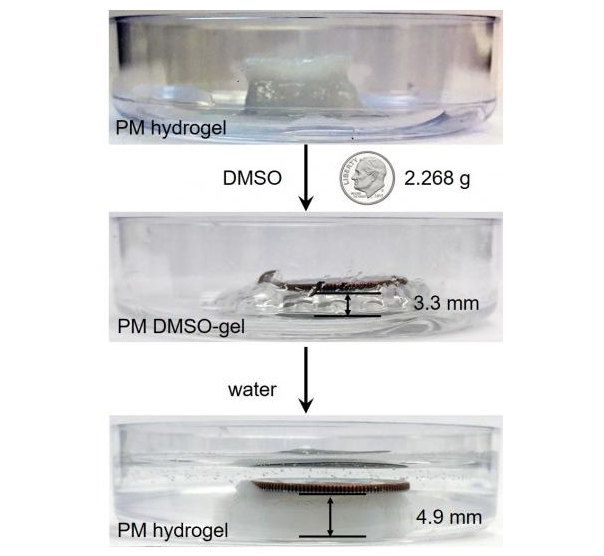 A 3-D printed gel structure lifts and lowers a US dime when alternately exposed to water and DMSO solvent. © Chenfeng Ke